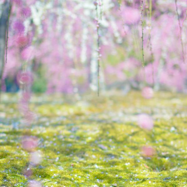 梅は咲いたか~♪桜はまだかいな~♪-城南宮-