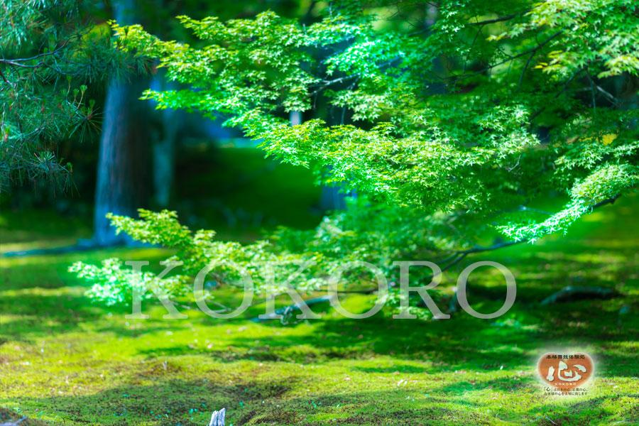 嵐山のオススメ観光スポット