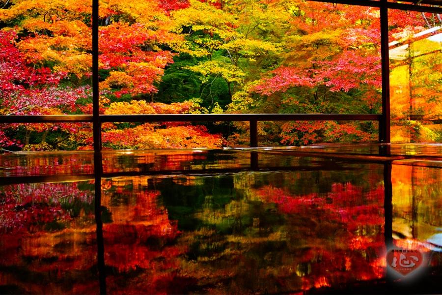天広く地ひろく秋もゆく秋ぞ~瑠璃光院・比叡山延暦寺~紅葉だより