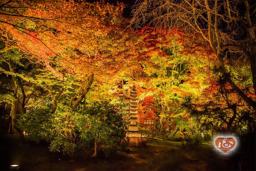 嵐山・宝厳院の紅葉写真「舞妓・花魁体験心」