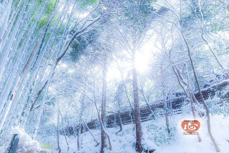 嵐山の雪景色・竹林